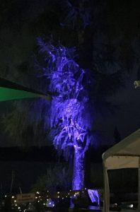 LED-Sonderlösung: Da leuchtet selbst der Baum wie im Märchen.